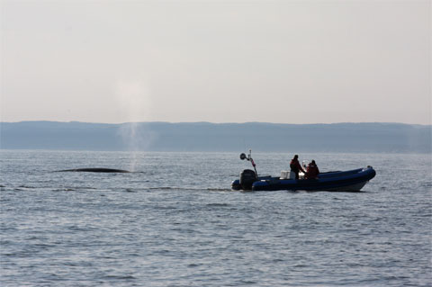 Research vessel with a Fin whale