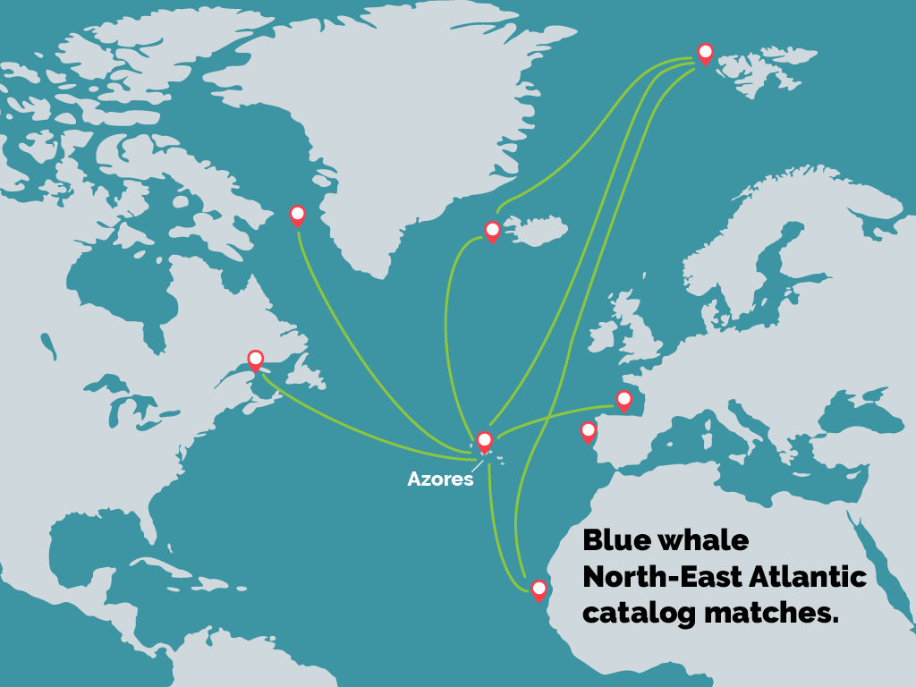 North Atlantic Blue whale map 2