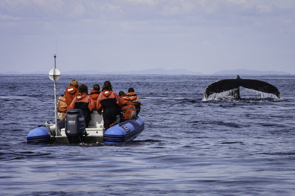 Researchers and participants observing a humpback whale
