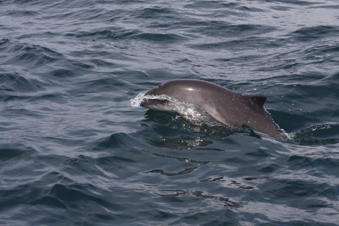 Photos sous marine  Whale-swimming-4-2